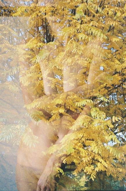 Annelie Bruijn   ElliottHalls Gallery   Autumn   000027 1