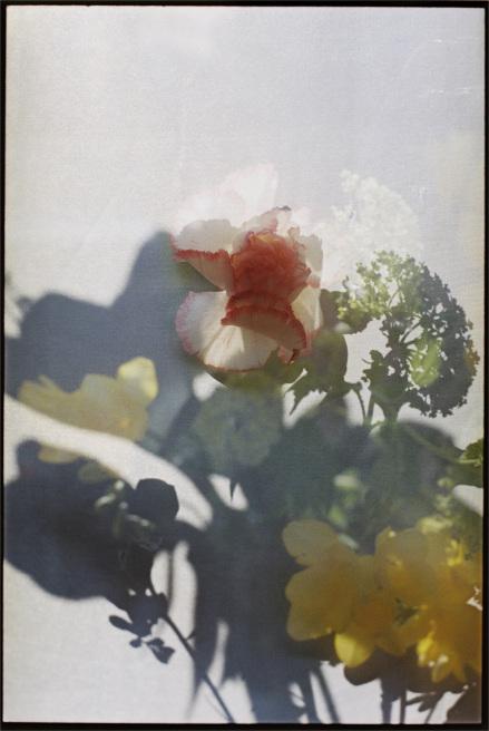Annelie Bruijn | bloem 1